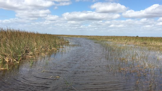 Weston, FL: A path through sawgrass...