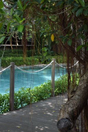 West Bali National Park, Indonesia: Pool area at the lodge