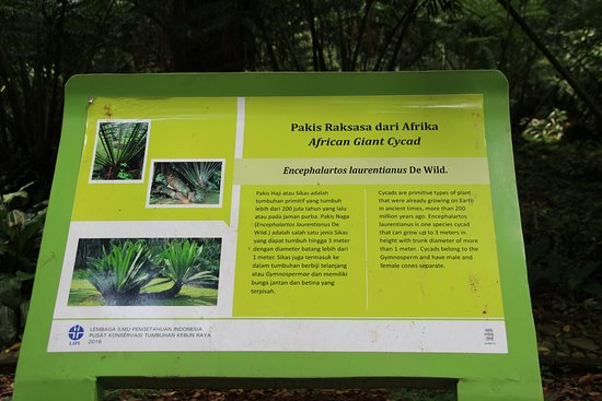 Bogor Botanical Gardens: Typical Information Board In Bahasa And English  (about Next Photo