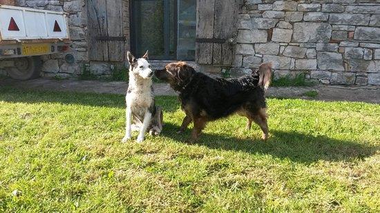 Agriturismo Poderino: due amiche