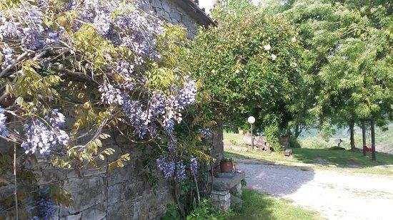 Roccalbegna, Italia: giardino