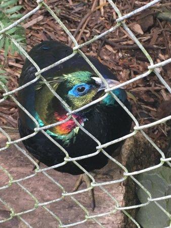 Hamilton Zoo: photo1.jpg