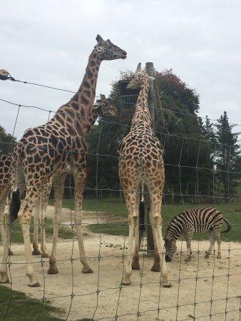 Hamilton Zoo: photo2.jpg