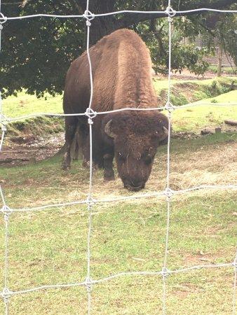 Hamilton Zoo: photo4.jpg