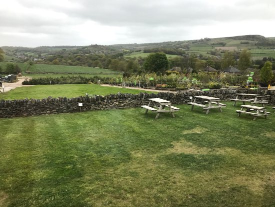 The Olive Tree Bistro Cafe Photo