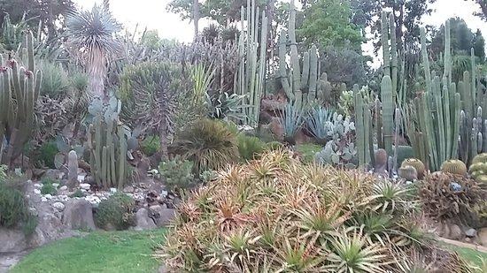 Serra piante tropicali bild fr n orto botanico di napoli for Serra piante grasse