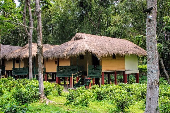 Nature Hunt Eco Camp, Kaziranga: The cottage we stayed in