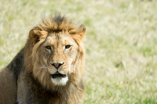 Meet our new King, Bahati at the Fort Wayne Children's Zoo