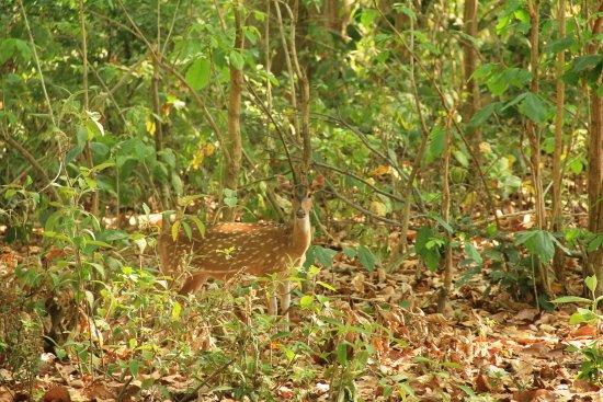 Rajaji National Park 비엔비