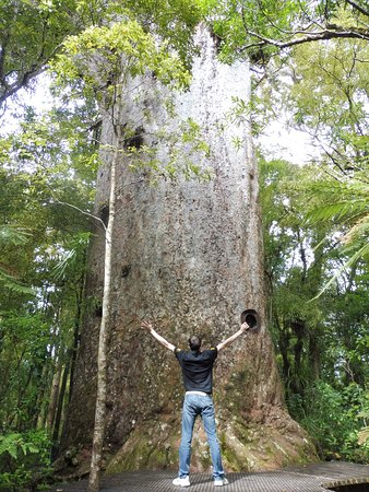 Waipoua Forest, New Zealand: Face au Yakas