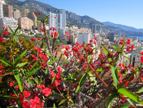 Scorcio esotico sul principato picture of exotic garden for Boulevard du jardin exotique monaco