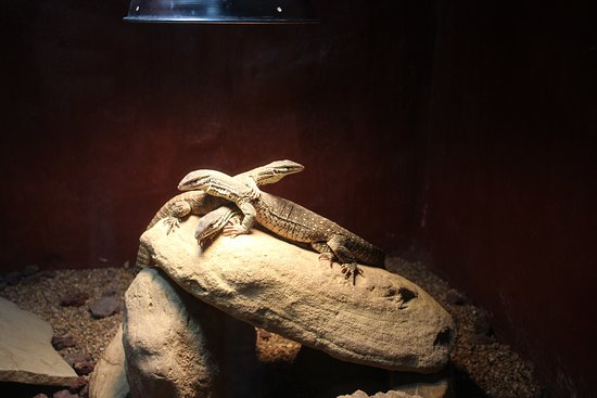 Bastrop, Техас: Lizards