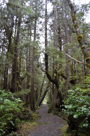 Port Hardy, Canada: The lush and pristine trail to San Josef Bay.