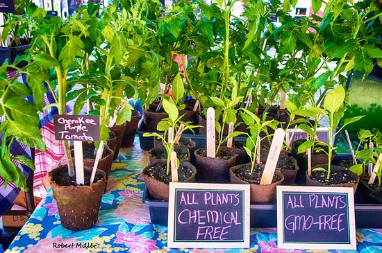 Bedford, VA: Get your plants at the maket