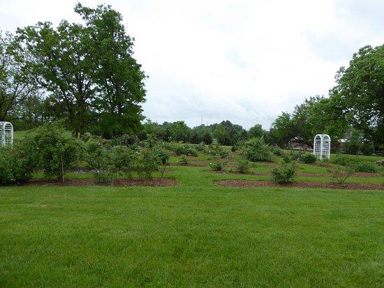Ben Lomond Historic Site: Gardens