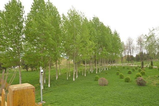 Ji'an Tomb Group: 駐車場から5号墳をのぞむが、木に隠れて見えにくい。