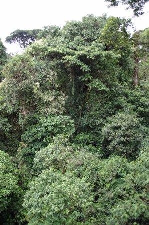 Braulio Carrillo National Park, Costa Rica: Rainforest canopy