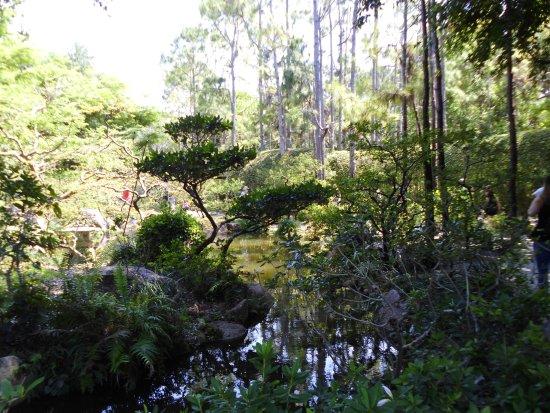 Morikami Museum U0026 Japanese Gardens: Morikami Gardens, Delray, Florida