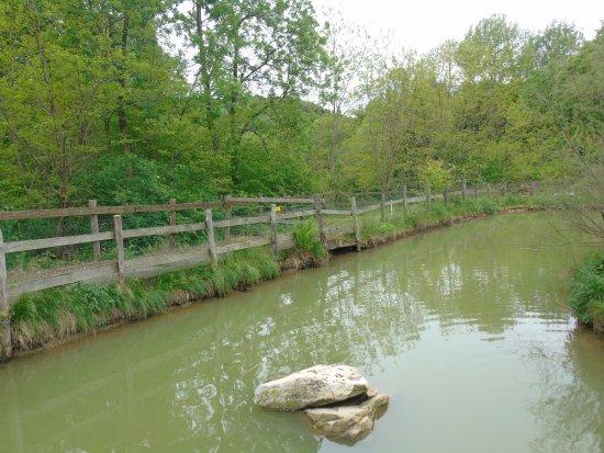 Nebbiuno, Italien: laghetto con anatre