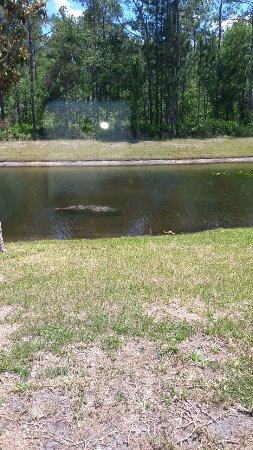 Orange Park, Floride : IMG-20170507-WA0033_large.jpg