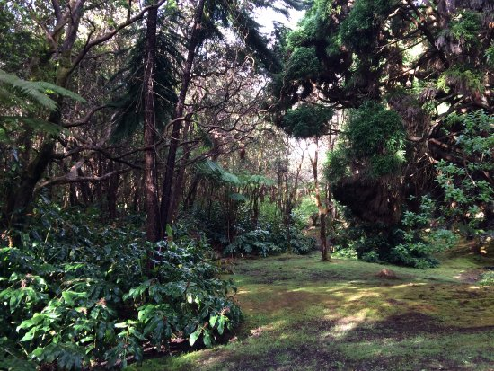 Hale Ohia Cottages: A few steps from the front door