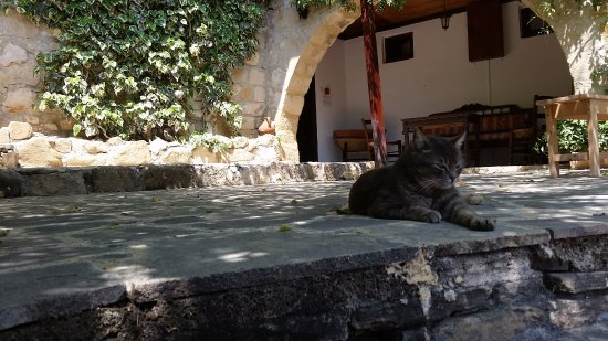Nikoklia, Chipre: Villa courtyard, and pet cat