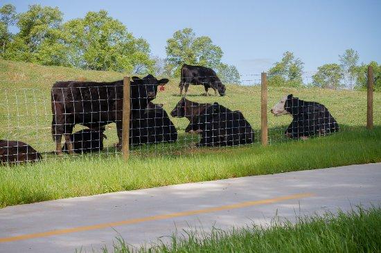 Ayers Dairy Farm section - the Carrollton GreenBelt trail