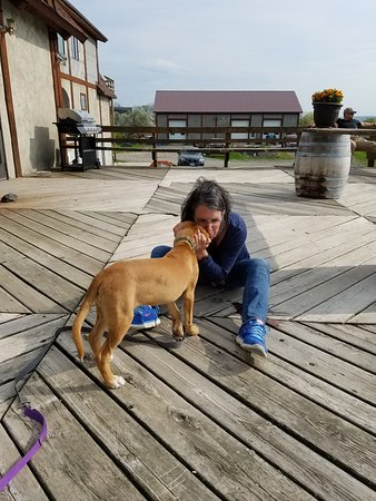 Hector, NY: enjoying another visitors puppy on the deck