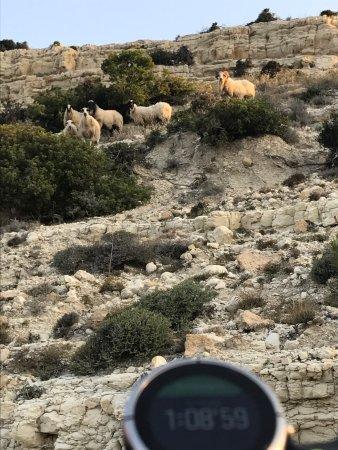 Tochni, Cyprus: photo4.jpg