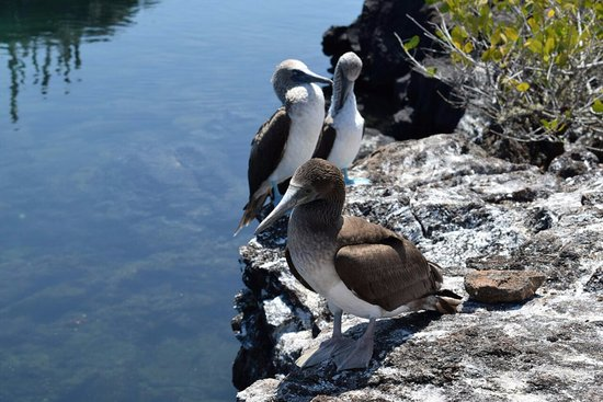 Hotel San Vicente Galapagos: blue footed booby