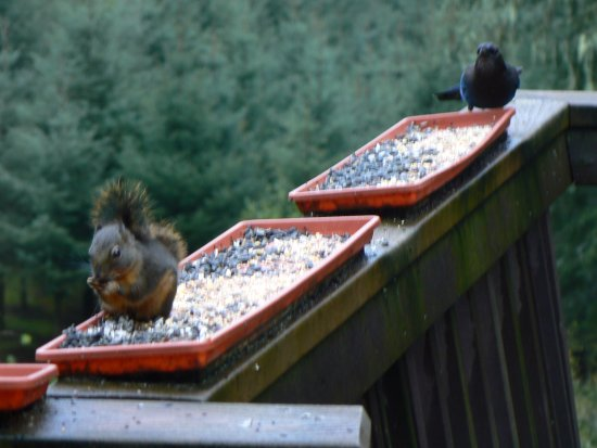 Misty Valley Inn B&B: Fun to eat breakfast and watch the birds and animals at the feeders..