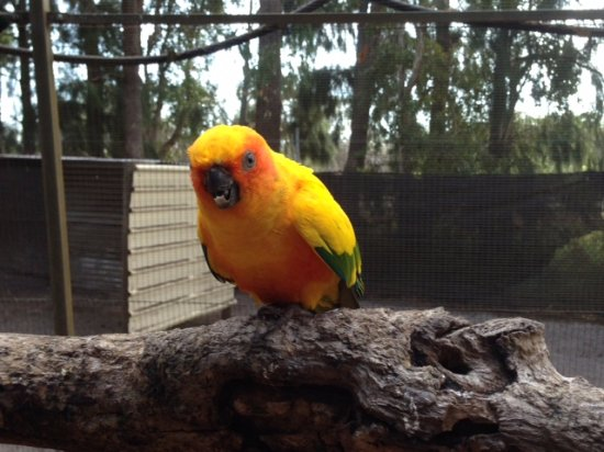 Peel Zoo: One of the friendly birds that land on your shoulder