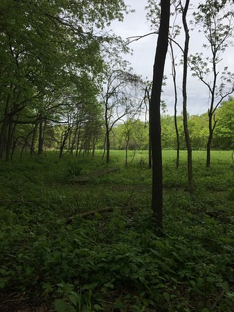 Oakland, IL: After substantial flooding the park was lush and green.