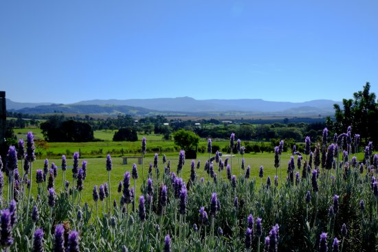 Berry, Australien: Magnificient views at Mountain Ridge Wines