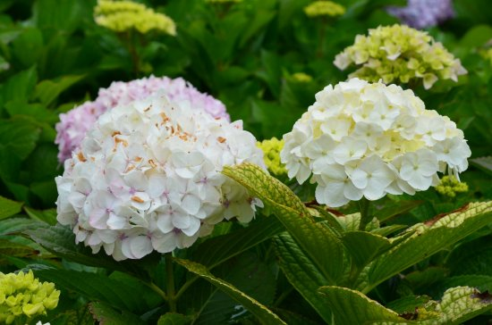 Ananau Restaurante: Flowers