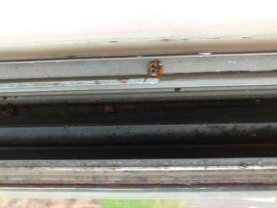 Chula Vista Resort: Dirty sill with dead bugs.
