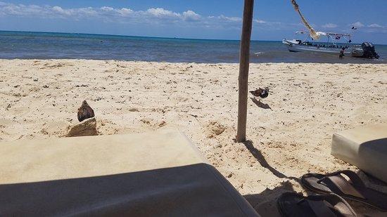 Zenzi Beach Bar & Restaurant: 20170507_115235_large.jpg