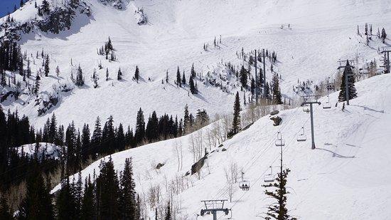 Alta, UT : White snow!