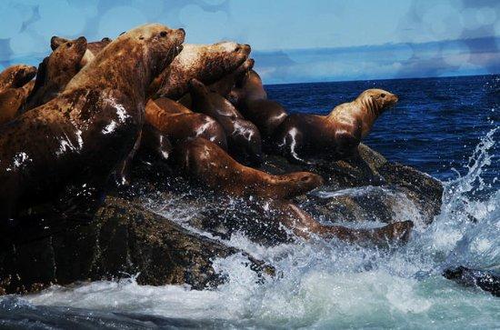 Seal Colony 3-Hour Boat Rental voor 5 ...