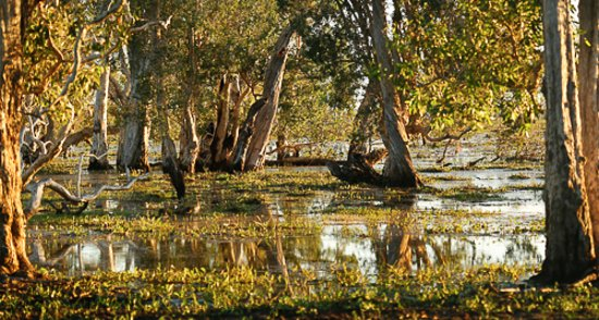 Mary River National Park, Australië: BAMURRU PLAINS WETLANDS