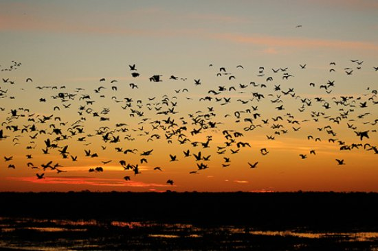 Mary River National Park, Australië: BAMURRU PLAINS BIRDS AT SUNSET