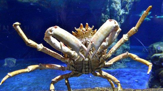 L aquarium de barcelona picture of l aquarium de for Aquarium de barcelona