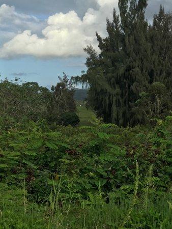 Kilauea, Χαβάη: photo4.jpg