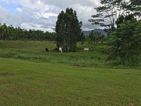 Kilauea, Hawaje: photo9.jpg