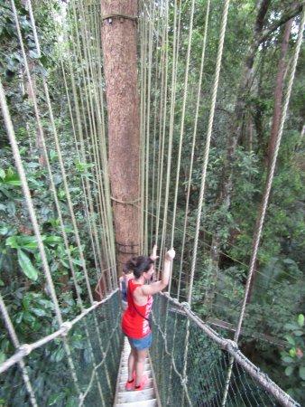 Национальный парк Таман-Негара, Малайзия: Sobre el canopy