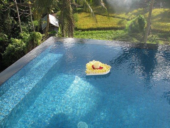 River sakti ubud bewertungen fotos preisvergleich for Swimming pool preisvergleich