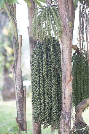 Putrajaya Botanical Garden: Trees