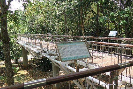 Putrajaya Botanical Garden: Walkway