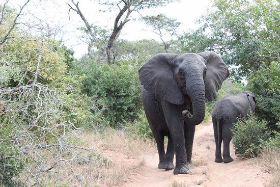 Elephant Safari Park Lodge Hotel Tripadvisor