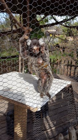 Klapmuts, South Africa: Monkey